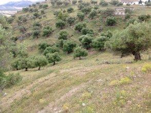 Большой участок земли в районе Каньете Реаль, Малага